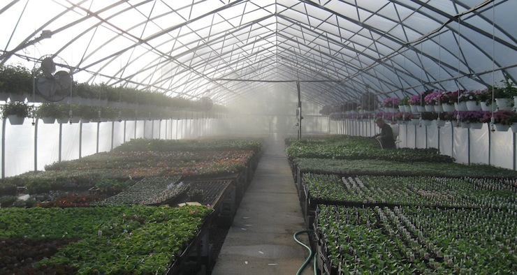 foggy greenhouse